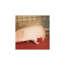 Barva COLORIS maso hnědá, 50ml